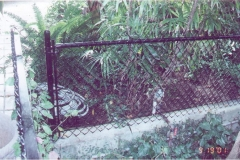 fence 4